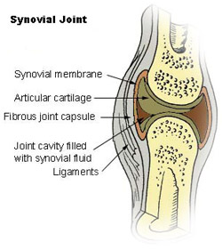Illustration of a synovial joint