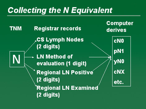 Diagram showing the collection of the N Equivalent