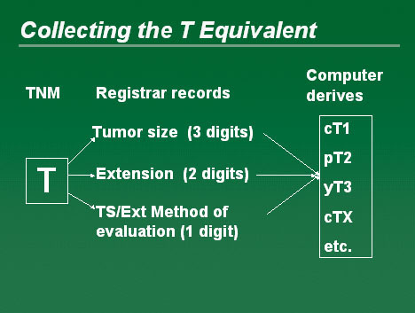 Diagram showing the collecting of the T Equivalent