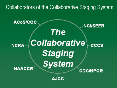 Diagram showing the collaborators of the collaborative staging system