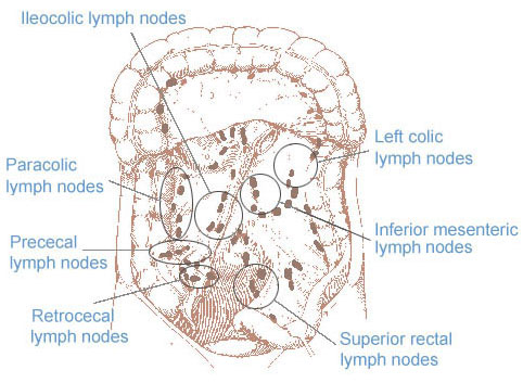 SEER Training: Regional Lymph Nodes