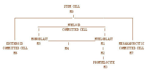 Flowchart showing the FAB classifications of acute myelogenous leukemia