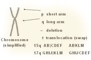 Illustration of a chromosome
