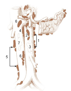 Numbered illustration of the left and right lumbar lymph nodes