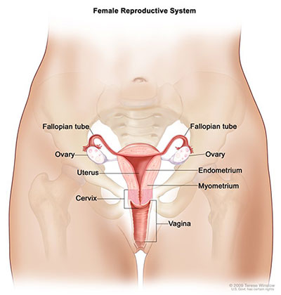Seer Training Salpingo Ovarian Peritoneal Functional Anatomy